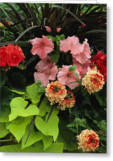 Petunias And Other Wholesale Flowers Greeting Card by Jonathan Blair