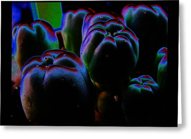 Greeting Card featuring the photograph Peyote Mind by Susanne Still