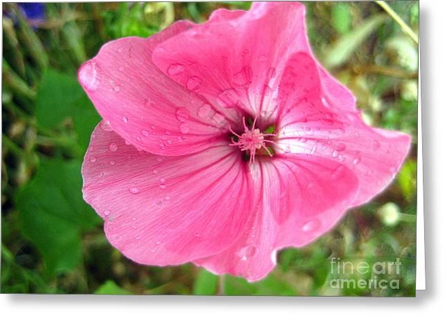 Rain Floral Greeting Card by Kathy Bassett