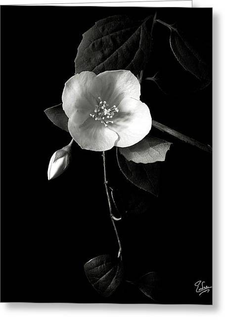 Philadelphus In Black And White Greeting Card by Endre Balogh