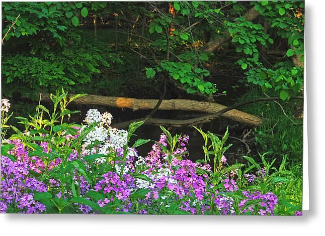 Phlox Along The Creek 7185 Greeting Card by Michael Peychich