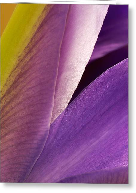 Photograph Of A Dutch Iris Greeting Card