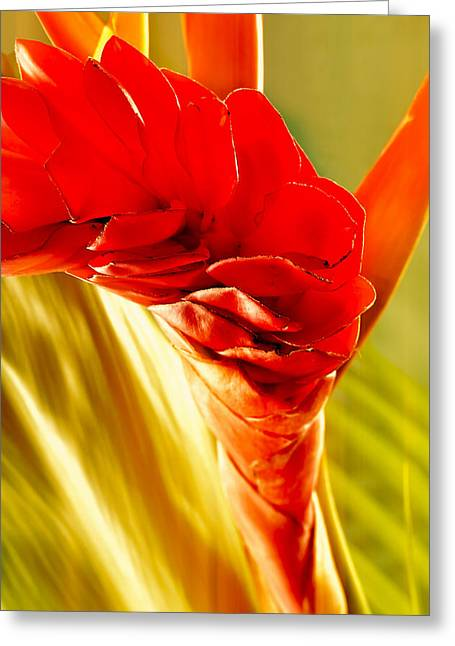 Photograph Of A Red Ginger Flower Greeting Card