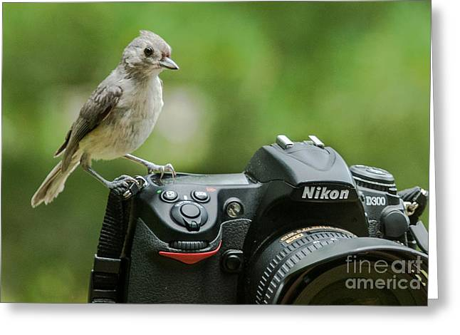 Photographer's Little Helper Greeting Card by Jim Moore