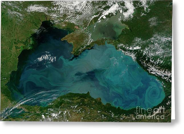 Phytoplankton Bloom In The Black Sea Greeting Card by Stocktrek Images