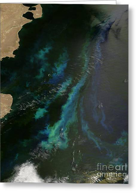 Phytoplankton Off Argentinas Coast Greeting Card by Nasa
