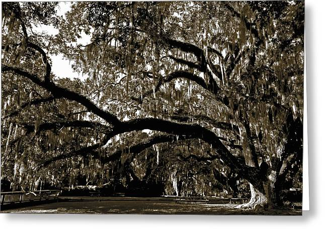 Greeting Card featuring the photograph Picnic Under The Oak by DigiArt Diaries by Vicky B Fuller