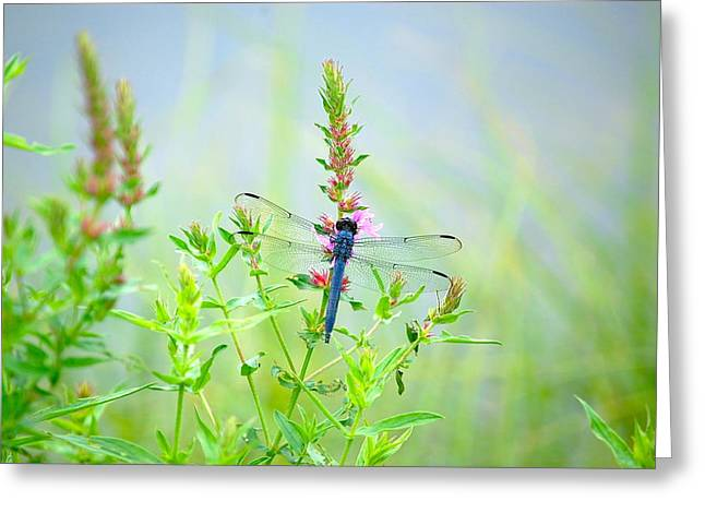 Picture Perfect Skimmer Dragonfly Greeting Card