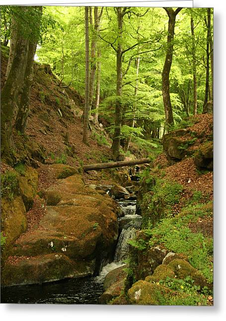 Picturesque Creek Greeting Card