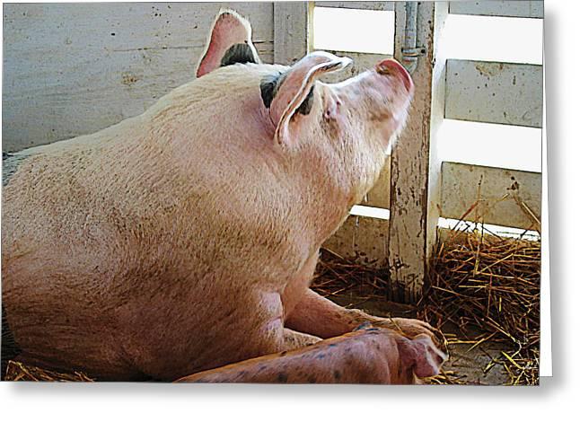 Pig Enjoying The Sun Greeting Card by Susan Savad