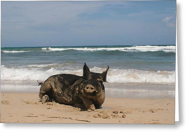 Pig In Paradise Greeting Card