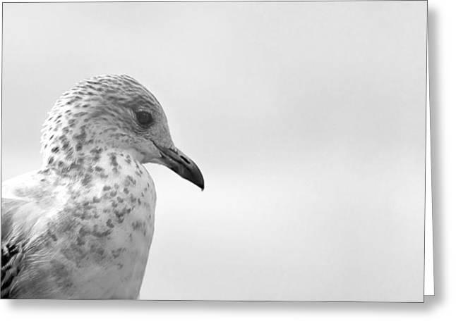 Pigeon Pride Greeting Card by Nicola Nobile