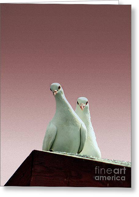 Greeting Card featuring the photograph Pigeons In The Pink by Linsey Williams