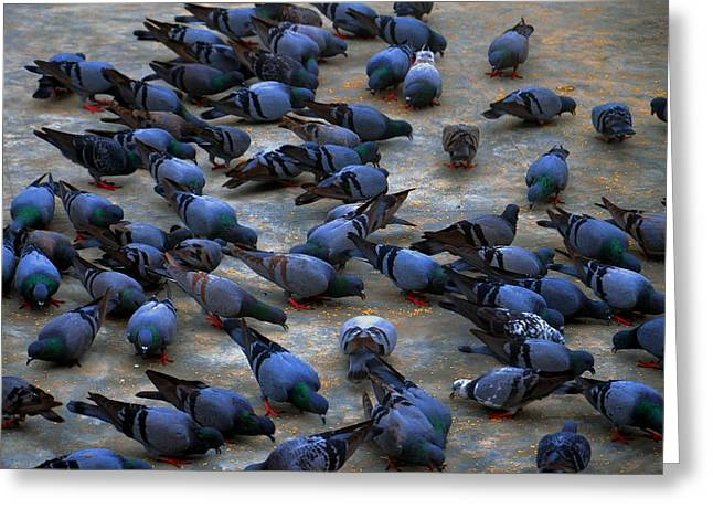 Pigeons Greeting Card by Johnson Moya