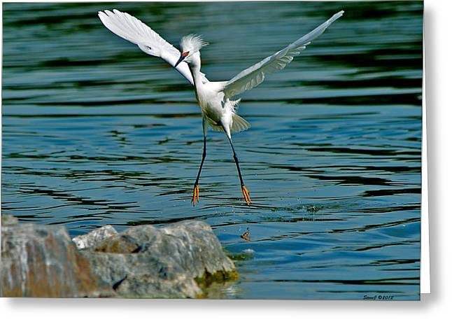 Pin Point Landing Greeting Card by Stephen  Johnson