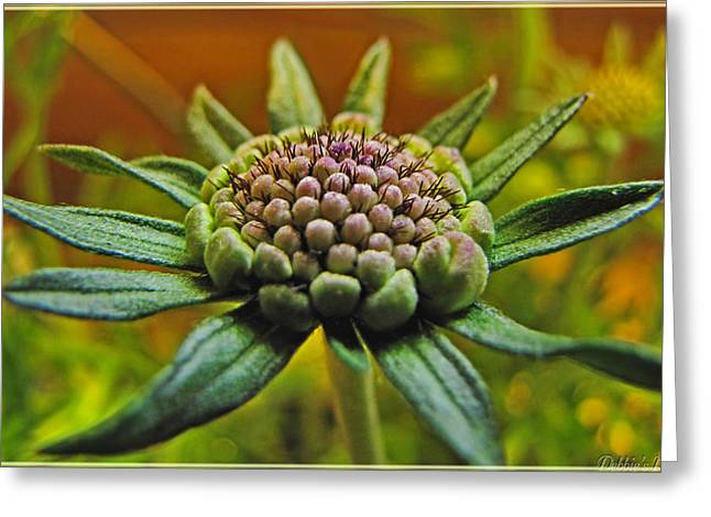 Greeting Card featuring the photograph Pinchshin Bud by Debbie Portwood