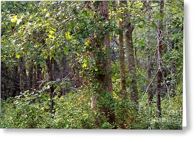 Pine Barrens Greeting Card