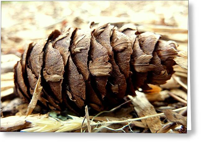 Pine Cone Greeting Card by Cindy Wright