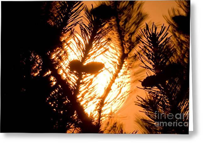 Pine Cone Silohuette Greeting Card