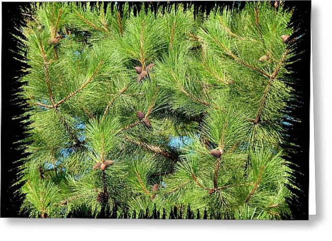Pine Cones And Needles Greeting Card by Will Borden