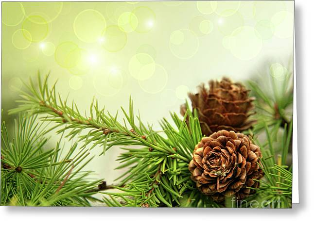 Pine Cones On Branches With Holiday Background Greeting Card by Sandra Cunningham