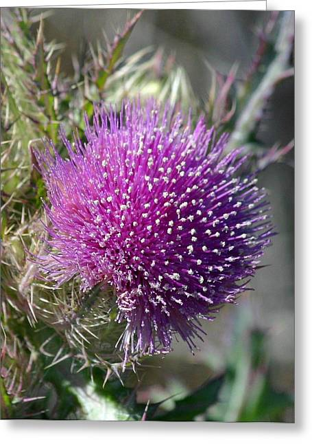 Greeting Card featuring the photograph Pine Flower by Jeanne Andrews