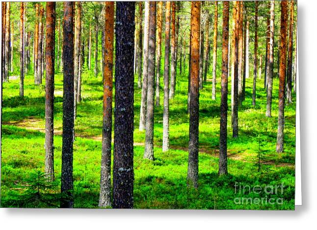 Pine Forest Greeting Card by Pauli Hyvonen