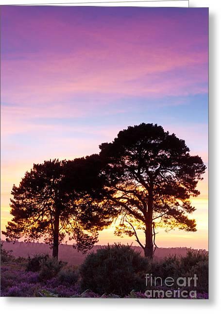 Pine Partnership At Sunset Greeting Card by Richard Thomas