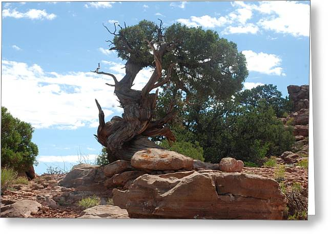 Greeting Card featuring the photograph Pine Tree By The Canyon by Dany Lison