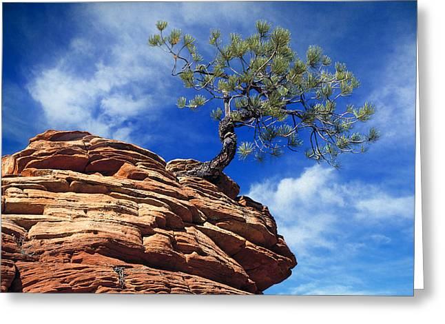 Pine Tree In Sandstone Greeting Card by Utah Images