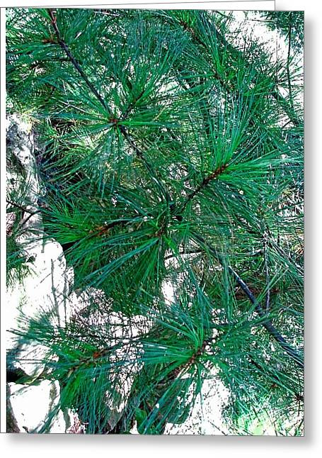 Pine With Rocks Greeting Card by Suzanne Fenster