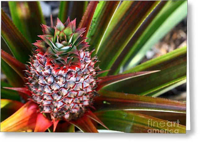 Greeting Card featuring the photograph Pineapple by Denise Pohl
