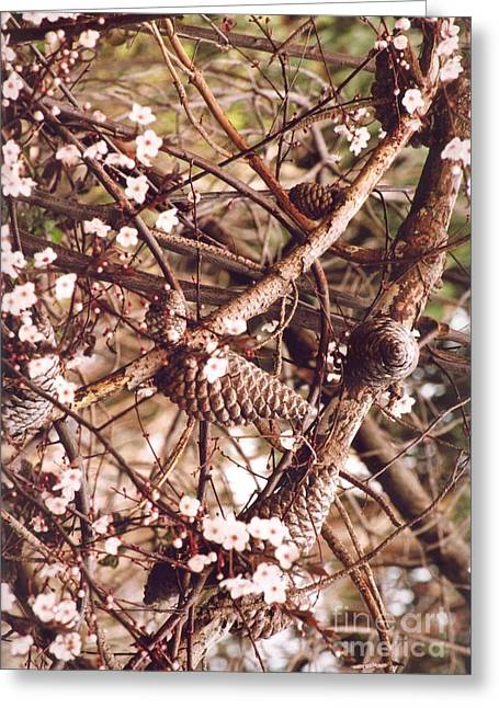 Greeting Card featuring the photograph Pinecones And Cherry Blossoms by Cynthia Marcopulos