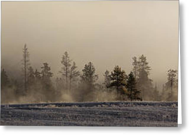 Pines In The Mist Greeting Card