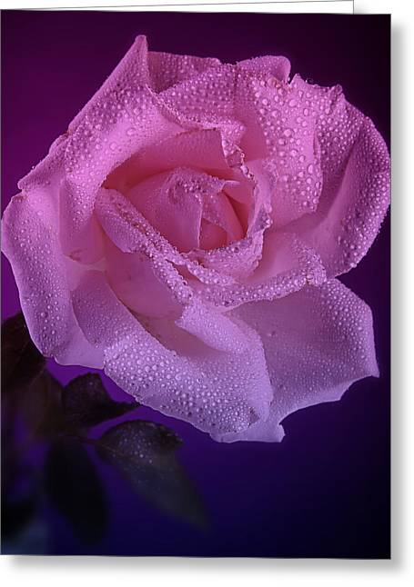 Pink And Blue Rose In The Rain Greeting Card by M K  Miller