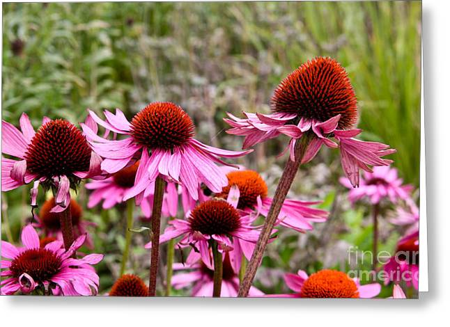 Pink And Orange Flowers Greeting Card by Jo