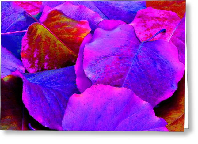 Pink And Purple Leaves Greeting Card by Sheila Kay McIntyre