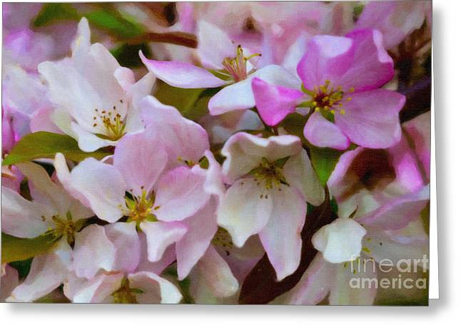 Pink And White Crabapple Blossoms Greeting Card by Donna Munro