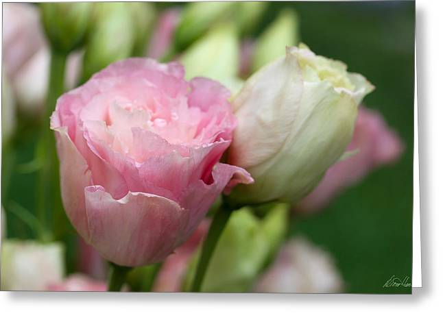 Pink And White Lisianthus Greeting Card