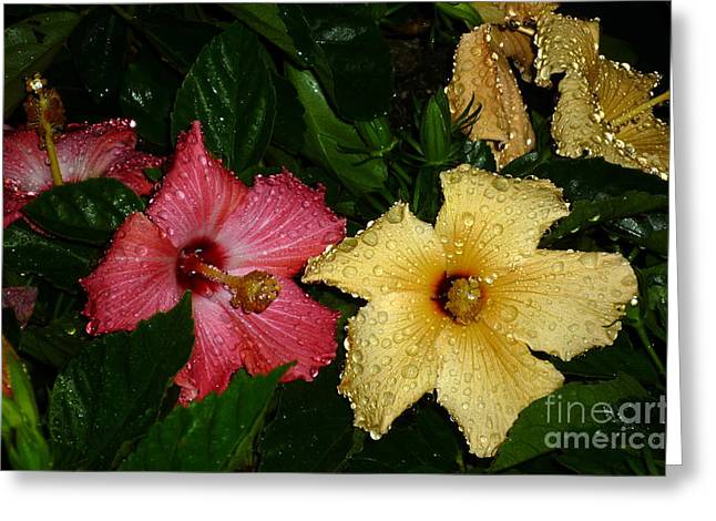 Greeting Card featuring the photograph Pink And Yellow Hibiscus After The Rain by Renee Trenholm