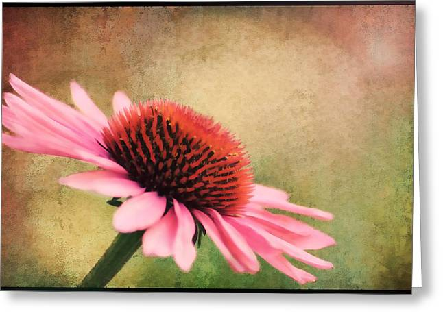 Pink Beauty Greeting Card by Darren Fisher
