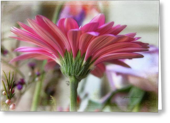 Greeting Card featuring the photograph Pink Beauty by Joan Bertucci