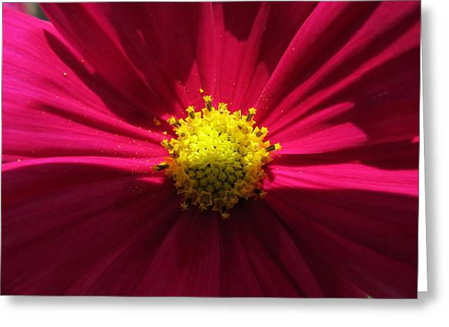 Greeting Card featuring the photograph Pink Beauty by Tina M Wenger