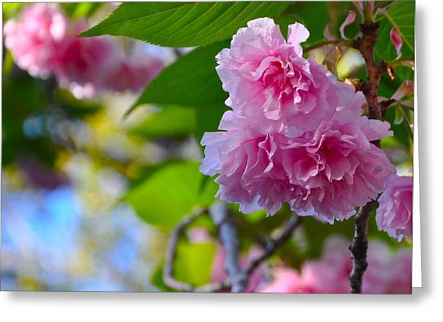 Pink Blossom Greeting Card by Lori Kesten