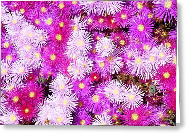 Pink California Wildflowers Greeting Card by Carla Parris