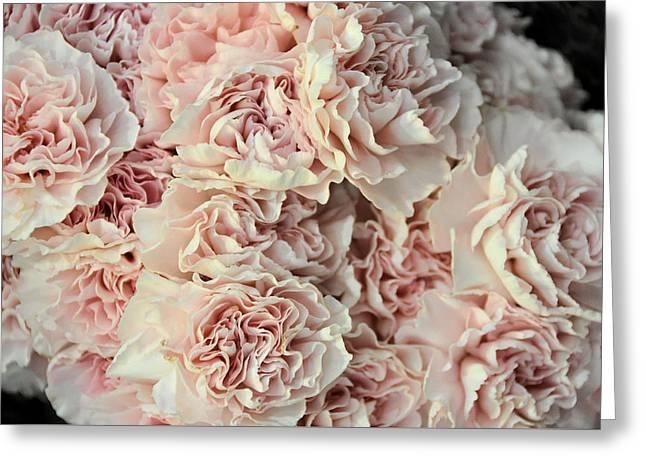 Pink Carnations Greeting Card