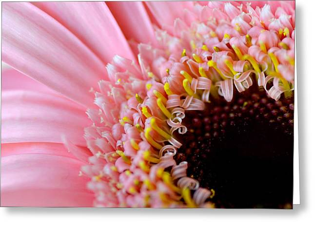 Pink Celebration Greeting Card by Julie Palencia