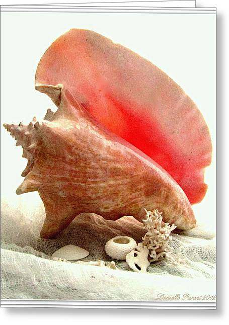 Pink Cong Shell Greeting Card by Danielle  Parent