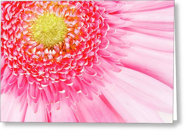 Pink Delight II Greeting Card by Tamyra Ayles