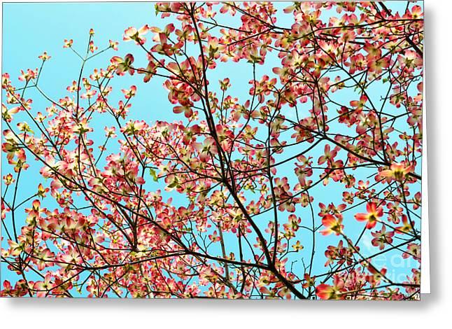 Pink Dogwood Sky Greeting Card by Debbie Portwood